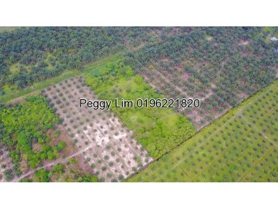 Agriculture Land For Sale Jalan Batu Dua Belas, Kuala Langat, Selangor