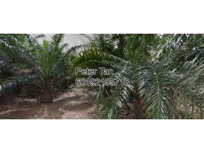 10.125 acres Agricultural Land at Kuala Selangor