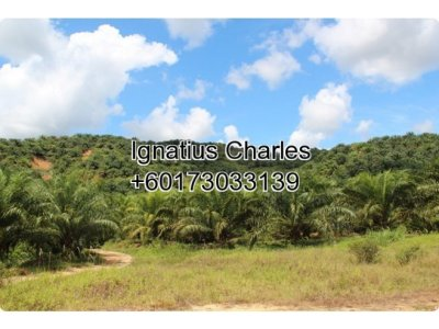 153 Acres Agricultural Land In Raub