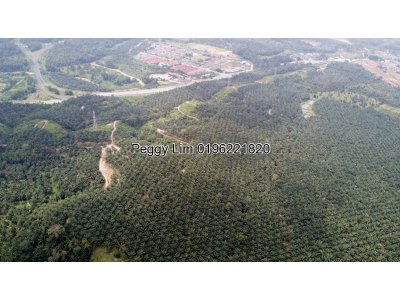 255 acres Palm Oil Agriculture Land For Sale , Karak, Pahang