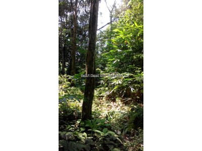 Agricultural/Bungalow Land For Sale Near TTDI, KL