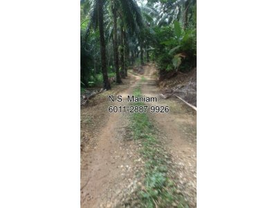 10 acres Oil Palm Plantation Land at Slim River