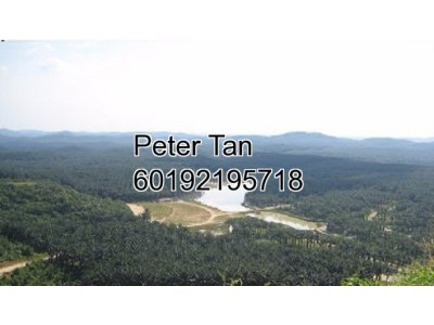 Sale of 445 acres Orchard land at Pedas, Rembau