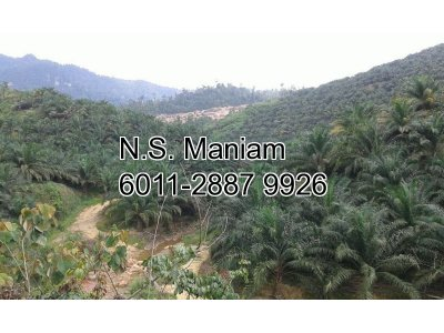 6,716 acres Oil Palm Plantation Land at Ulu Nenggiri, Kelantan