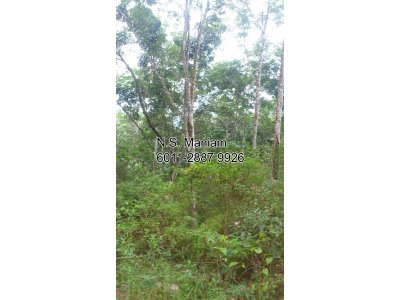 9 acres of Agriculture Land at Sg Siew, Batang Padang, Perak